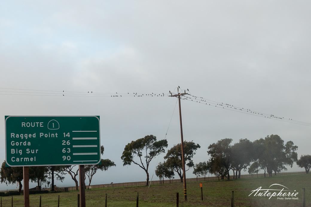 pacific-coast-highway-us-california(3)