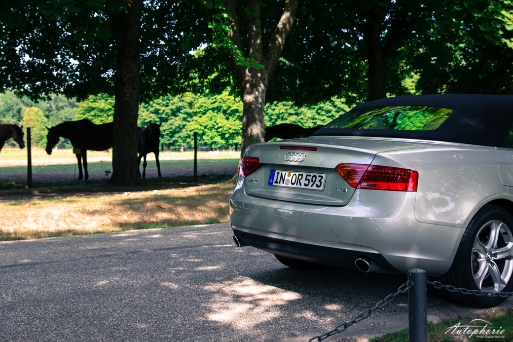 audi-a5-cabriolet-geschlossen-heck-pferde